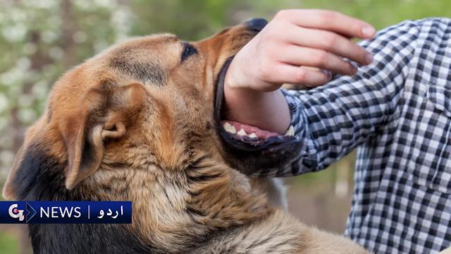کتے کا ڈر ہی کتے کے کاٹنے کی وجہ