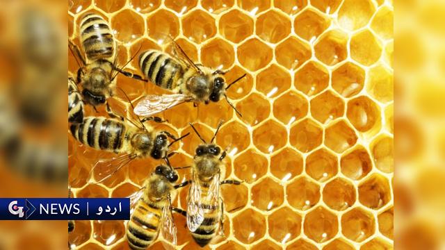 ڈانس کے مختلف طریقے، شہد کی مکھیوں کی زبان