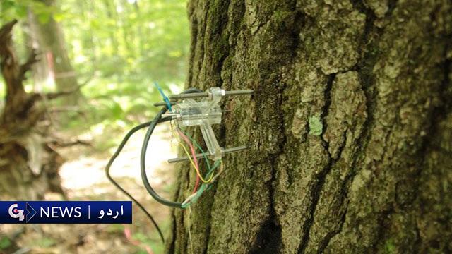 ایسا درخت جو ٹوئٹ کے ذریعے اپنا حال بیان کرتا ہے