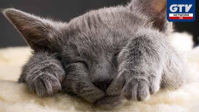 عدالت نے بلی کے قتل کے مقدمے کا فیصلہ سنادیا گیا