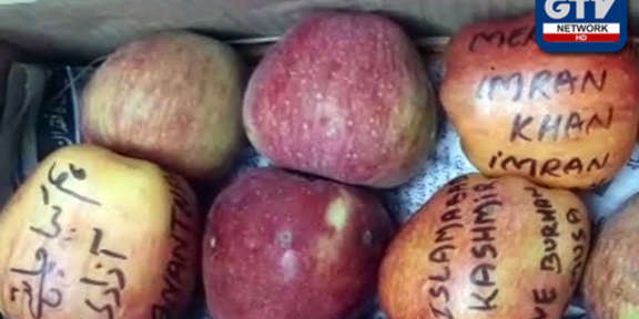 سیبوں
