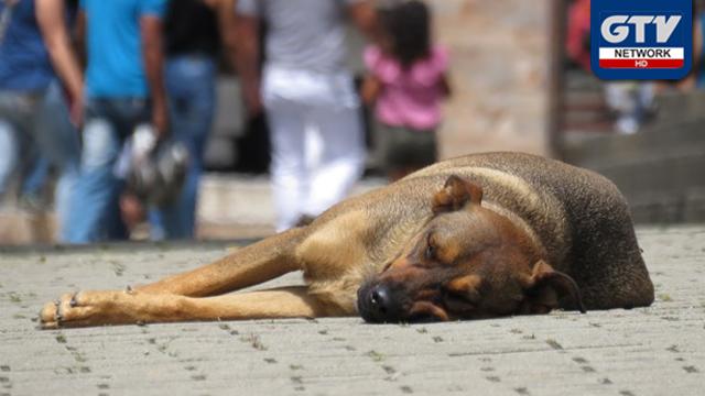 سندھ ہائی کورٹ کا کتوں کو مار کر انسانی جانیں بچانیں کا حکم