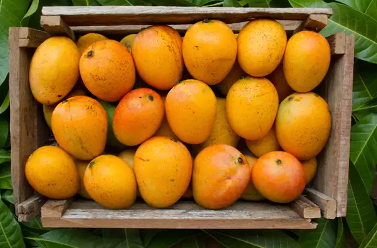 Why is the mango the king of fruits? urdu blog