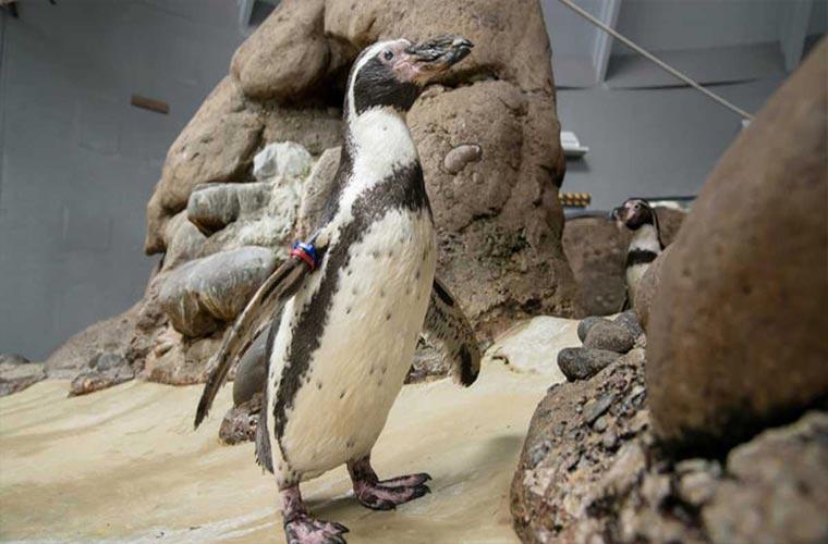 پینگوئن